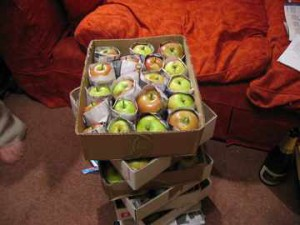 Having apple trees is one thing. Individually wrapping a couple of sacks of apples is quite another...
