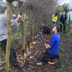 Hedgelaying November 2017-March 2018